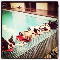 shutterfly dogs pool instagram