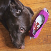 dog photo book idea shoe