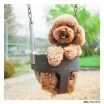 dog at playground shutterfly