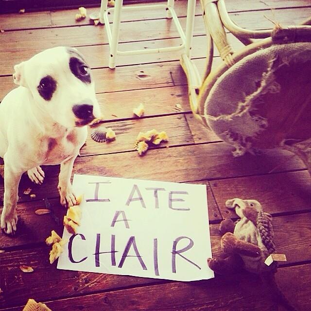 dog shaming photo