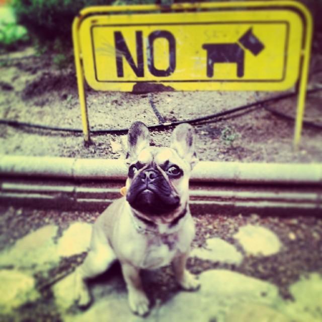 dog photo book idea shutterfly