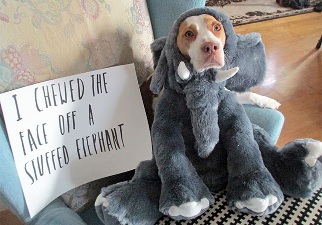 dog shaming pic