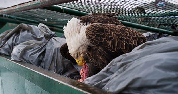 bald eagle instagram photo